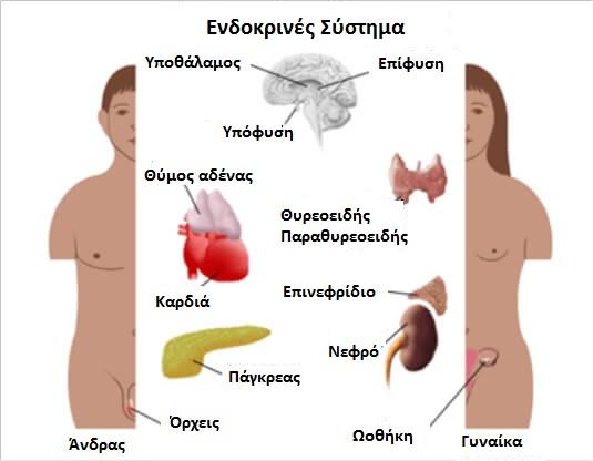 αιτίες των βασικών ορμονικών προβλημάτων