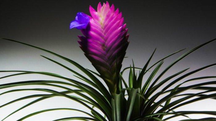 Είναι πολύ όμορφα εξωτικά φυτά και αξίζει να τα γνωρίσετε!