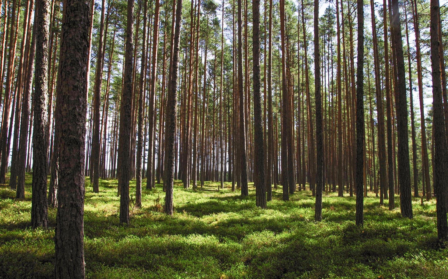 10 δέντρα