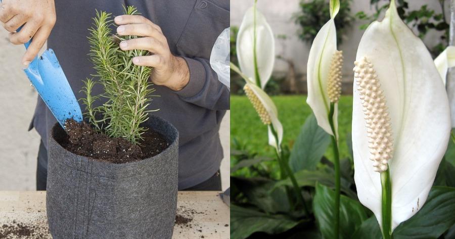 φυτά για θετική ενέργεια