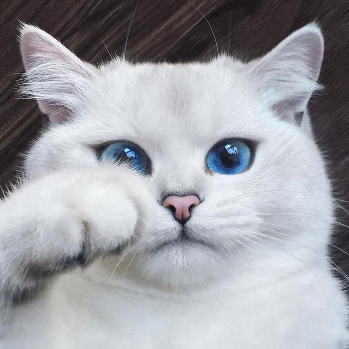 διάσημη γάτα