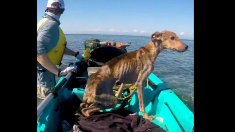 ναυάγησε σκύλος