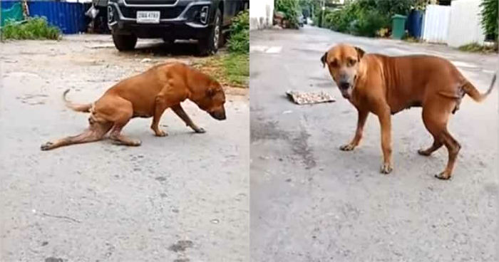 Πανέξυπνος σκύλος