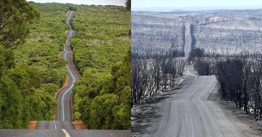 οικολογική καταστροφή στην Αυστραλία