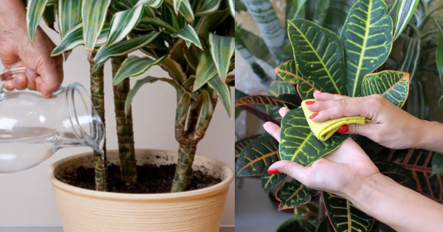 σωστή φροντίδα φυτών