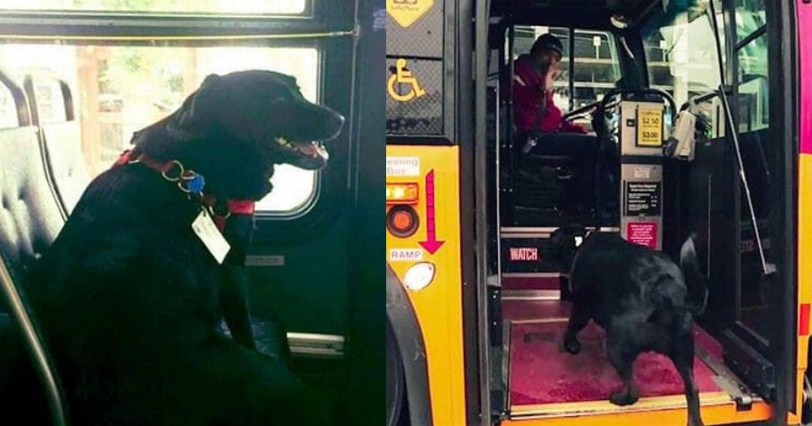 Σκύλος παίρνει λεωφορείο