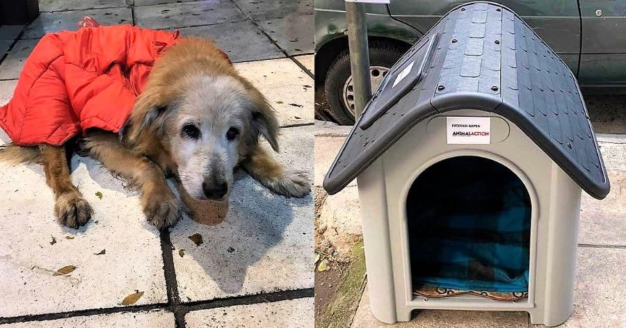 σπίτι σε μία αδέσποτη σκυλίτσα