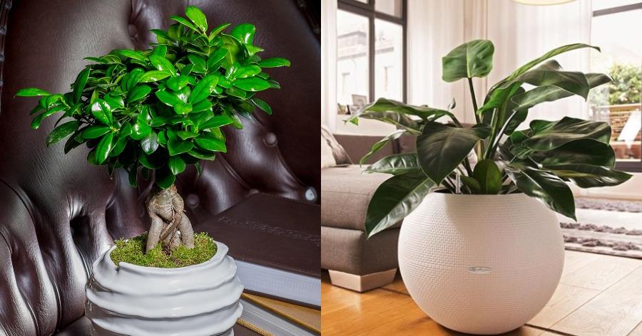 φυτά σπιτιού