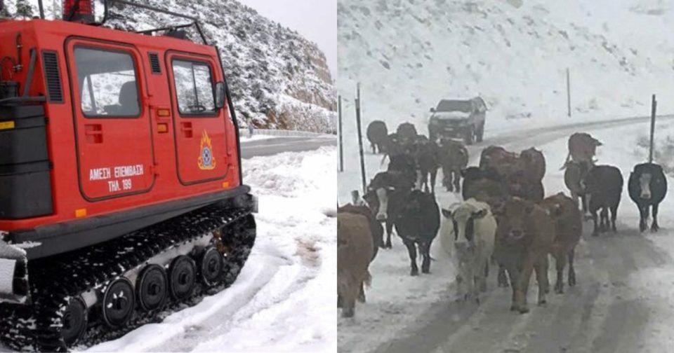Θρίλερ στην Κρήτη, με αγνοούμενους κτηνοτρόφους.