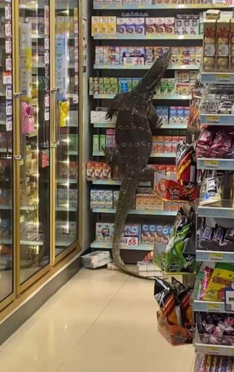 Εισβολή τεράστιας σαύρας σε σούπερ μάρκετ της Ταϊλάνδης.