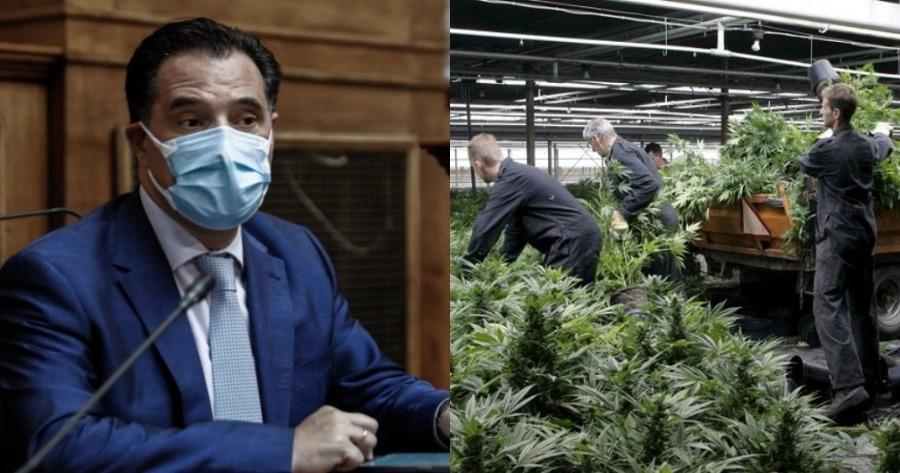 Δηλώσεις Άδωνι Γεωργιάδη: Τι είπε για τη φαρμακευτική κάνναβη;