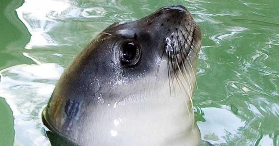 Αλόννησος φώκια δάγκωσε τουρίστρια