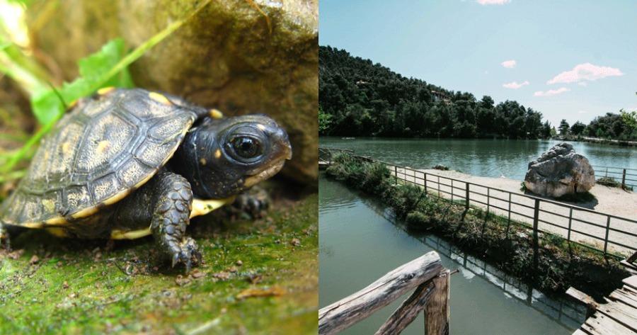Περιστατικό λίμνης Μπελέτσι: Τι συνέβη, με τις χελώνες του νερού;