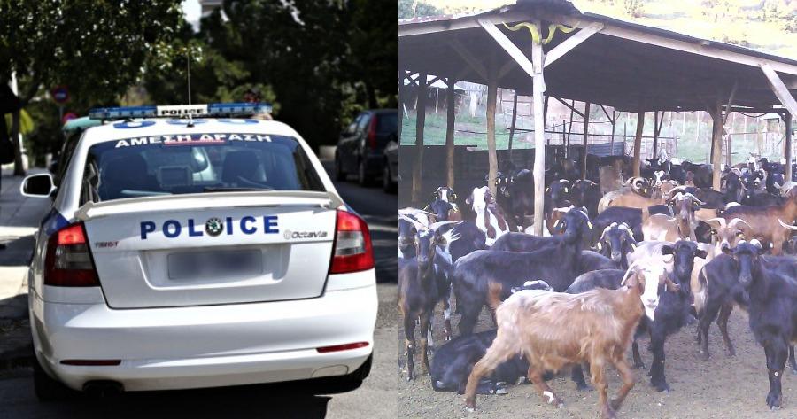 Περίπτωση εκδίκησης στο γείτονα: Έσφαξαν κοπάδι από κατσίκες.