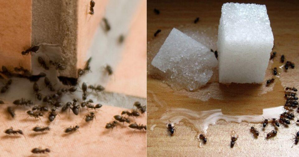 Μυρμήγκια στο σπίτι τέλος
