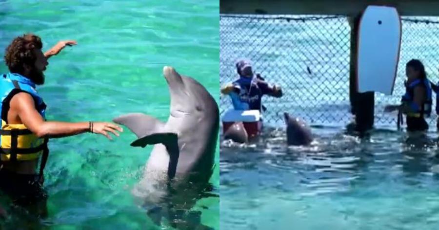 Survivor Πάρκο Δελφινιών