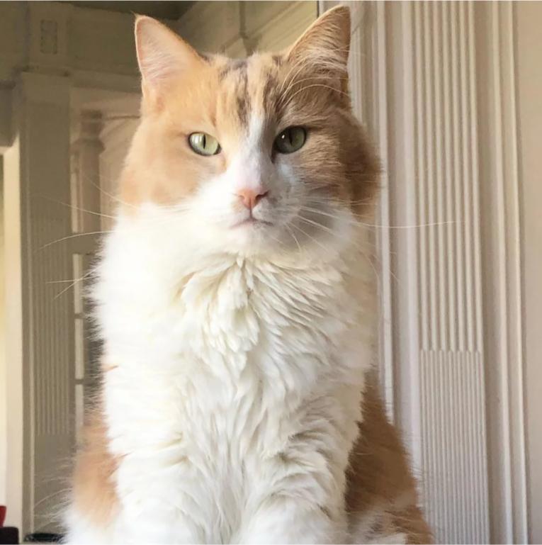 Η γάτα της Δωροθέας Μερκούρη