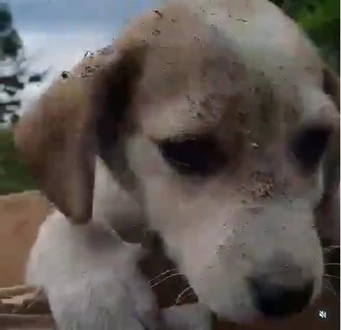 Περιστατικό με Βασίλη Χαραλαμπόπουλο: Βρήκε κουτάβι στα σκουπίδια.