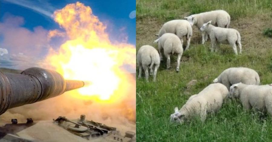 Βλήμα του στρατού σκότωσε κοπάδι με πρόβατα.