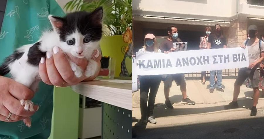 Ηλικιωμένη μαχαίρωσε γατάκια στη Νέα Σμύρνη