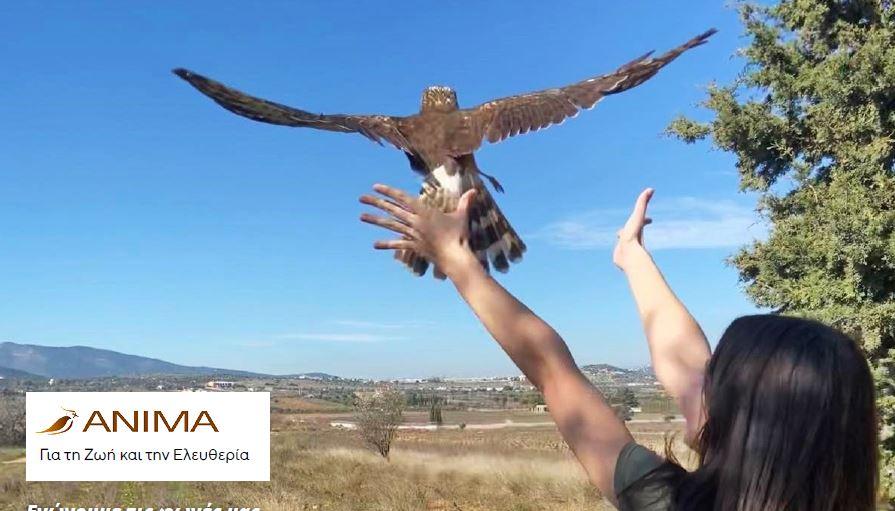 Παγκόσμια Ημέρα Περιβάλλοντος Πουλιά