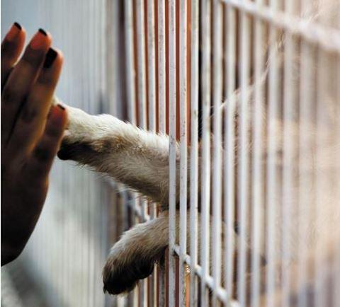υιοθεσία αδέσποτων ζώων