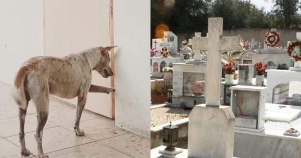 60χρονος από την Κρήτη έθαψε τον σκύλο στον οικογενειακό τάφο