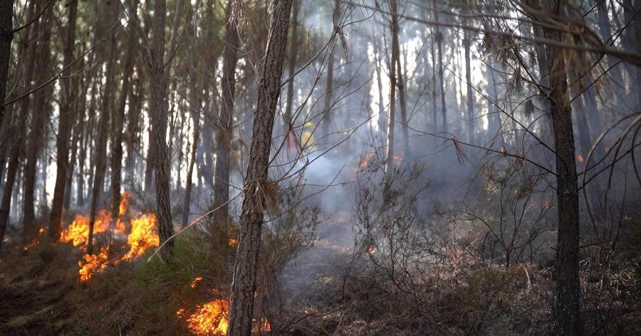 Αναζωπύρωση της πυρκαγιάς στη Ρόδο,στην περιοχή Καλαμώνας