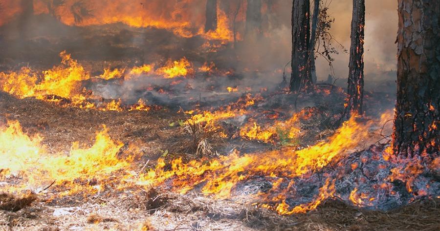 Κιλκίς: Σε εξέλιξη πυρκαγιά στη Δημοτική Ενότητα Γαλλικού