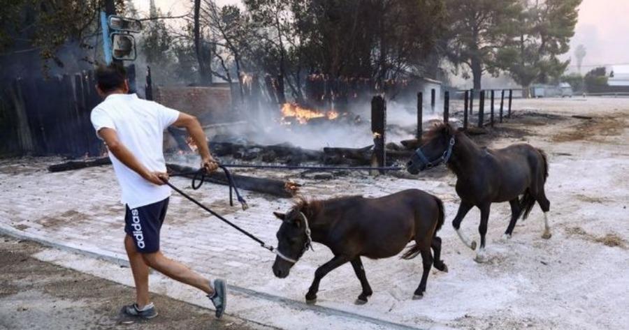Πυρκαγιά στη Βαρυμπόμπη: Ολοκληρώθηκε τη νύχτα η απομάκρυνση των αλόγων που κινδύνευσαν