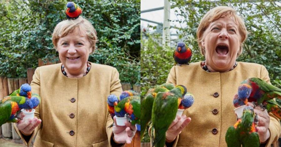 Η Καγκελάριος Μέρκελ και το απρόοπτο με τους παπαγάλους