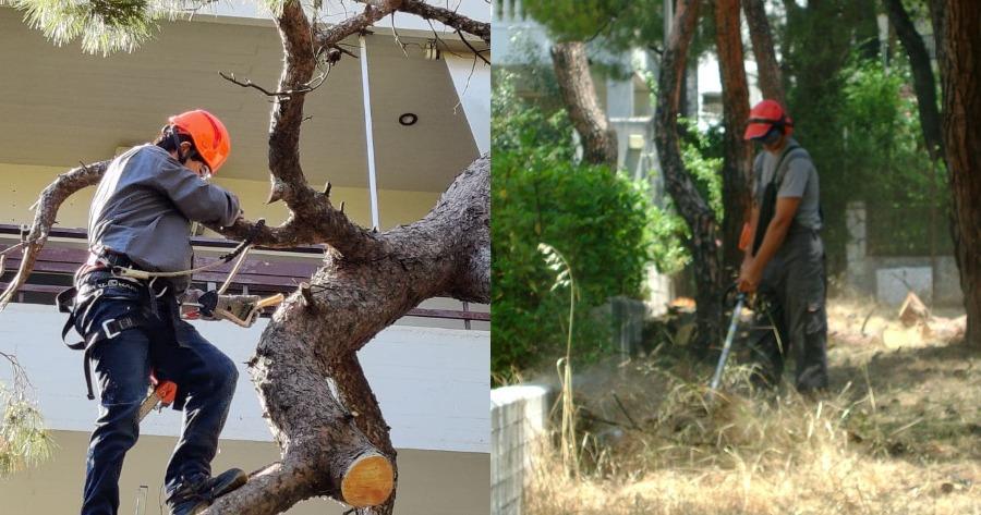 Κλάδεμα δέντρων εντός οικοπέδων χωρίς άδεια Δασαρχείο
