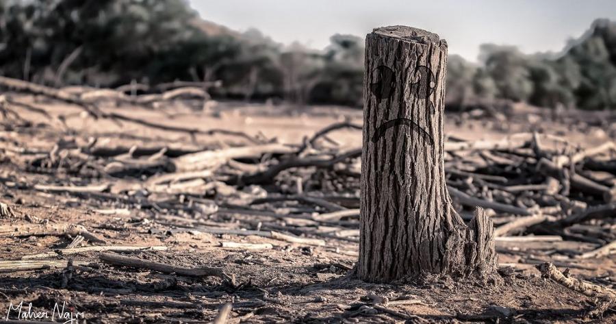 Κλίμα: Δεν διαφαίνεται στον ορίζοντα το τέλος της αποψίλωσης καθώς οι εθνικοί στόχοι και η χρηματοδότηση δεν επαρκούν