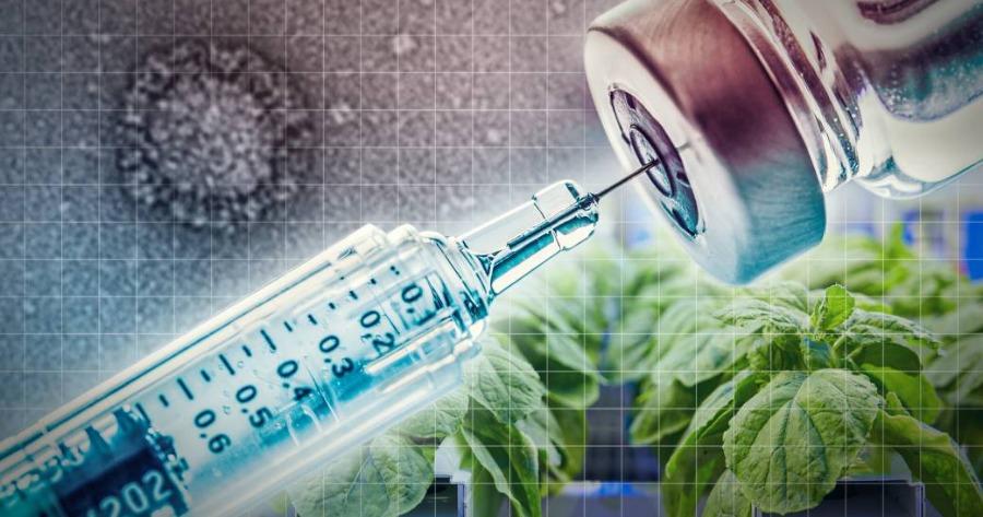 Medicago: Η ιαπωνική εταιρεία ετοιμάζεται να ζητήσει έγκριση για το πρώτο εμβόλιο Covid-19 από φυτό του καπνού